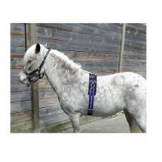 Longeersingel voor de mini pony